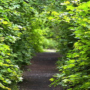 Clear Your Path Consultation